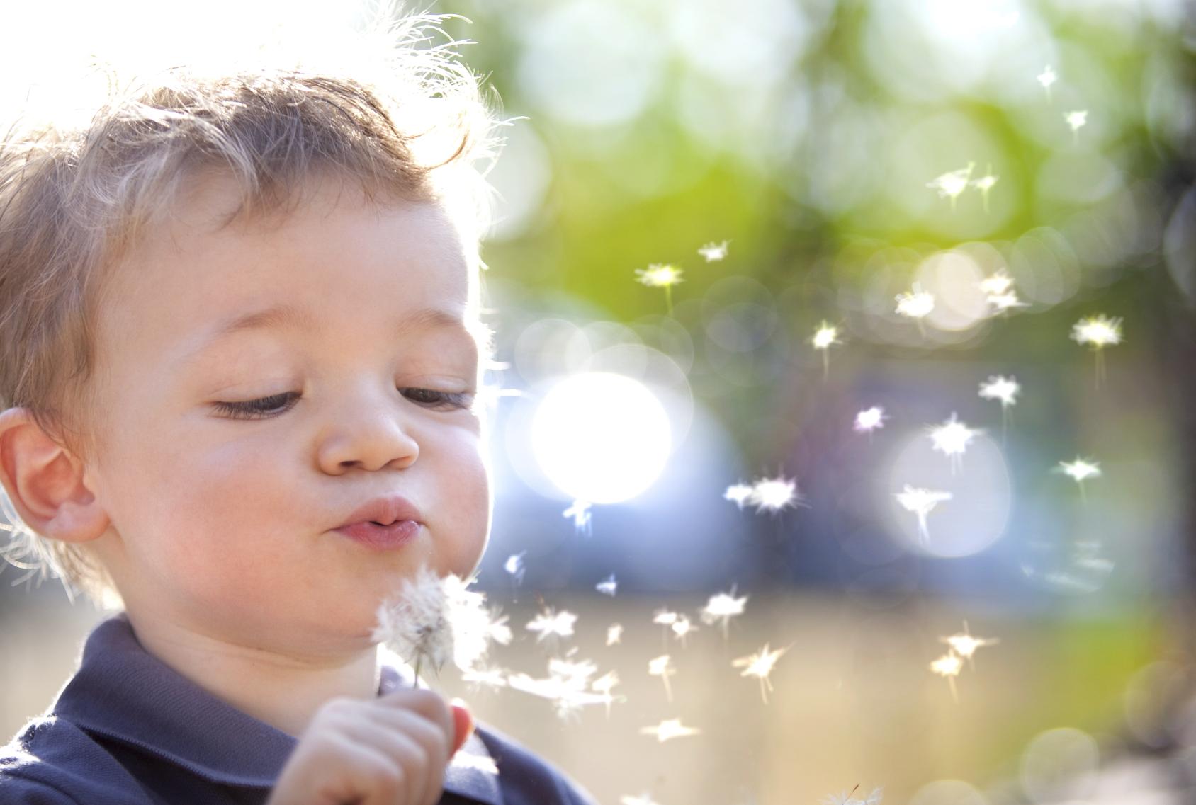 beautiful blond kid blow dandelion outdoor