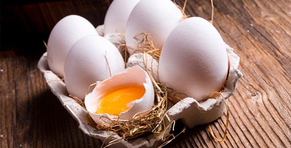 Egg_check_panthermedia_slider1